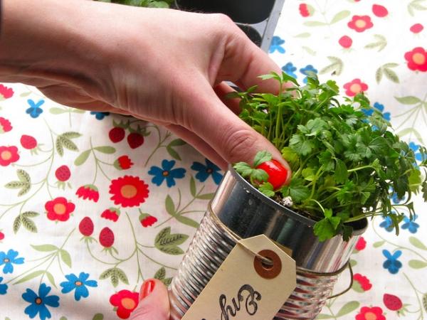 plantas-en-latas01