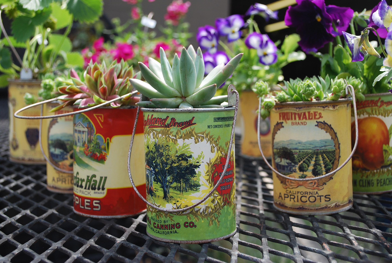 plantas-en-latas05
