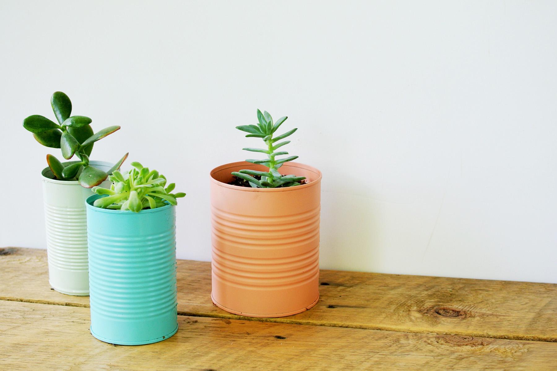 plantas-en-latas09