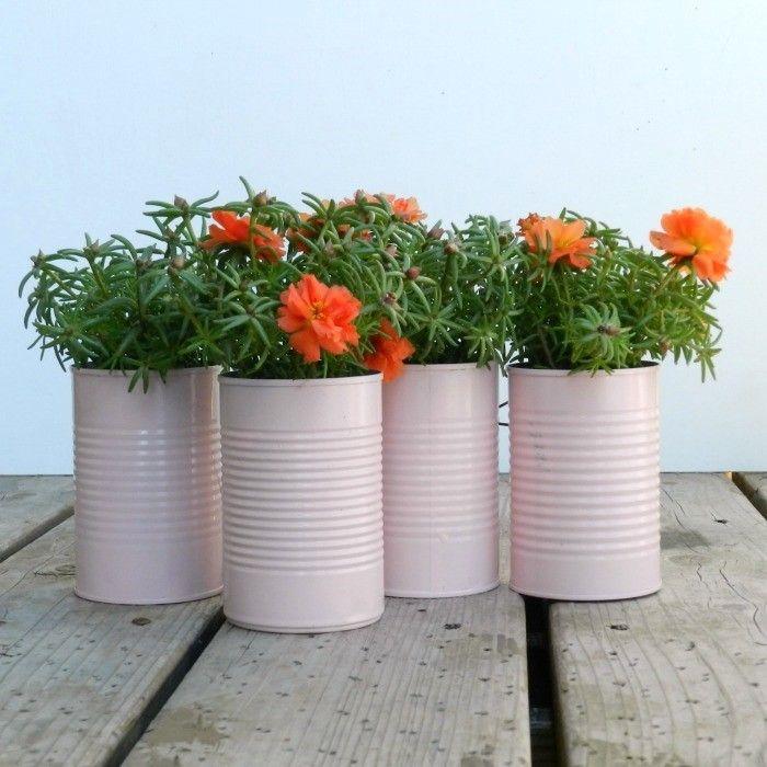 plantas-en-latas10